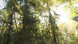 樹木001(ストックムービーHD素材)